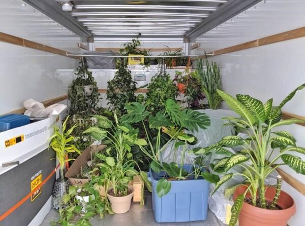 Tips for Safely Moving House Plants